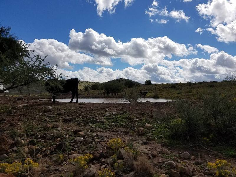 This is a cow and the pond at the beginning of the trail.