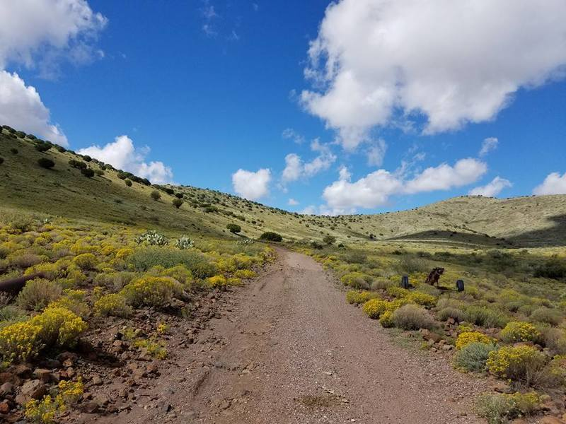 The brush and wildflowers at the first part of the trail.
