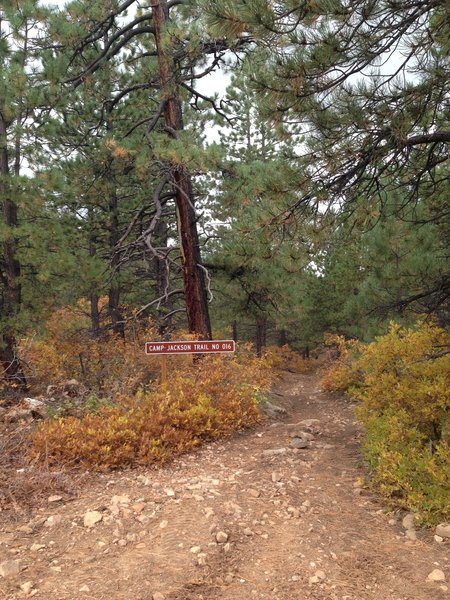 The entrance to Camp Jackson Trail off of the dirt road.