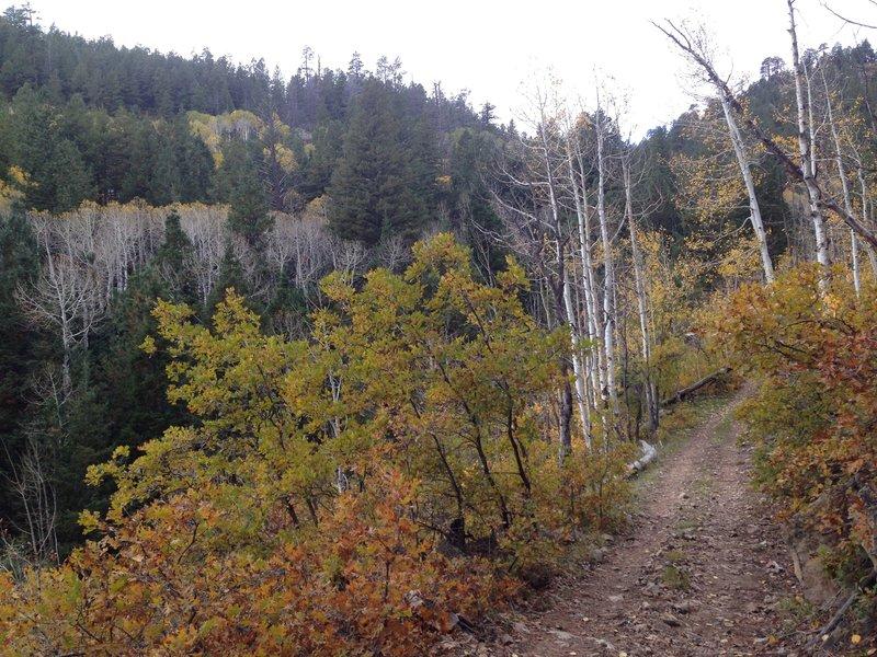 The trail starts a gradual climb.