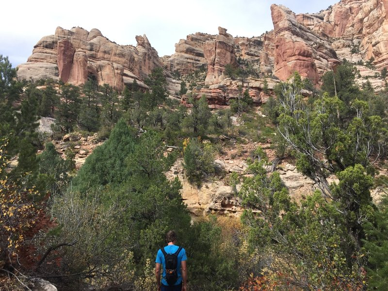 The sandstone features in this canyon are stunning.