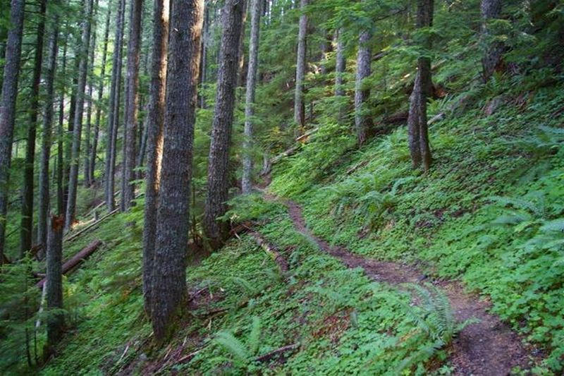 Green Canyon Trail is on steep slopes with pistol butted tree trunks. Photo by John Sparks.