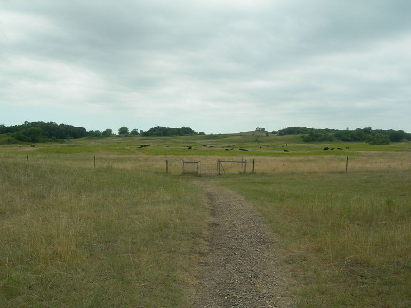 The NCT passes through an open prairie area with the swing gate taking hikers through the fence.  Notice the herd of cows?