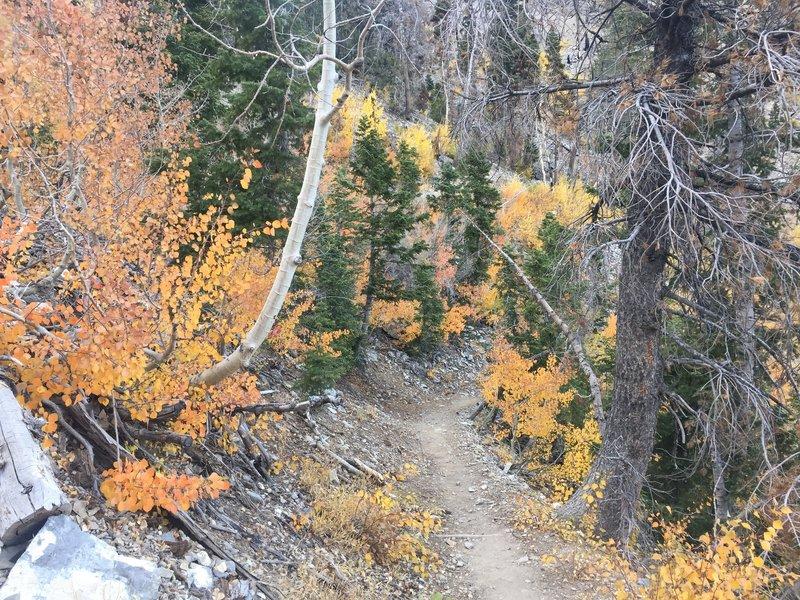 Trail through the aspens.