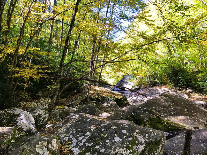 Boone Fork Creek.