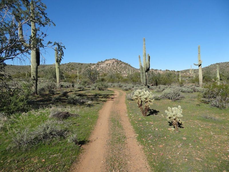 Escondido Trail at McDowell Mountain Regional Park. with permission from Maricopa-County-Parks