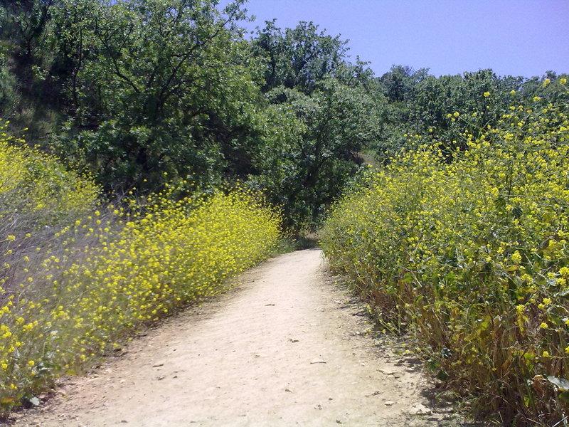 Betty B. Dearing Trail through the wildflowers.