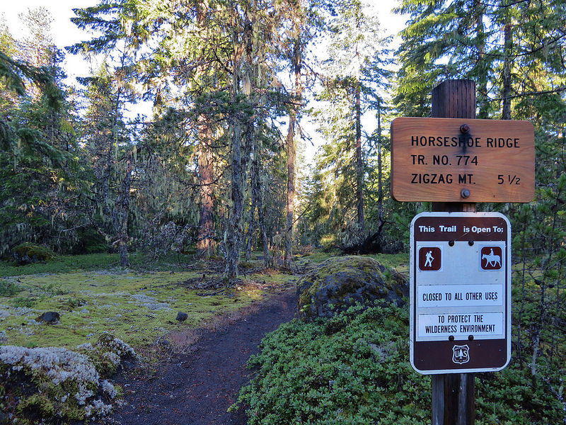 Horseshoe Ridge Trail sign at the trailhead, amidst the moss carpet of Old Maid Flats. Photo by Wanderingyunks.