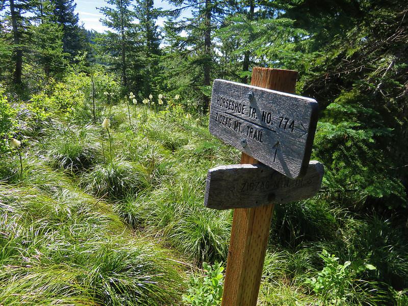 The long slog up Horseshoe Ridge Trail is rewarded with multi-peak views on Zigzag Mountain Trail.  Photo by Wanderingyunks,