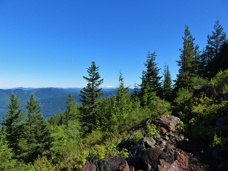 Mt. St. Helens in distance from near the top of Horseshoe Ridge Trail. Photo by Wanderingyunks.