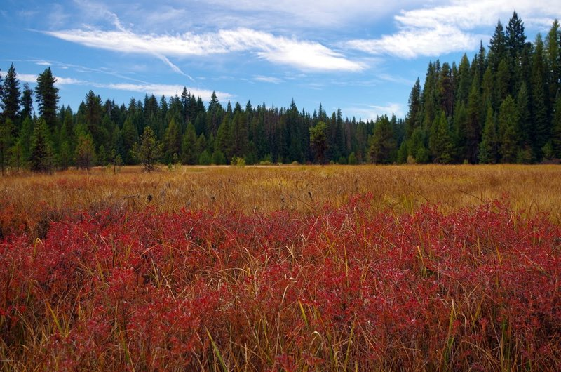 Little Crater meadow in fall. Photo by Gene Blick.