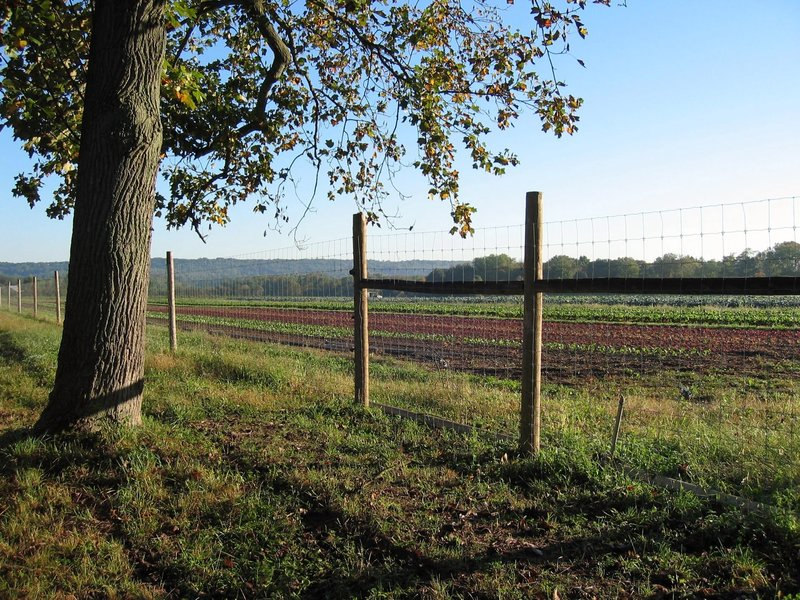 Honey Brook Organic Farm.