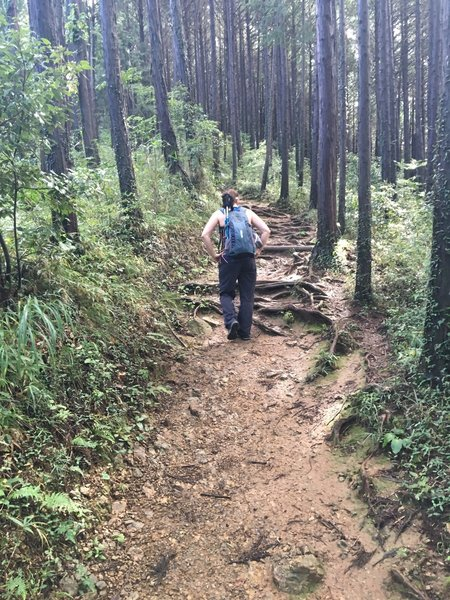 Hiking up Mt. Shiroyama.
