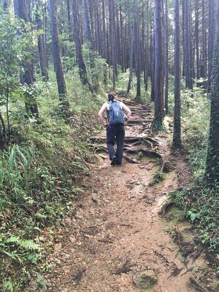 Hiking up Mt. Shiroyama.