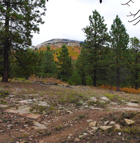 Fall colors along the West Wagon Road Loop Trail.
