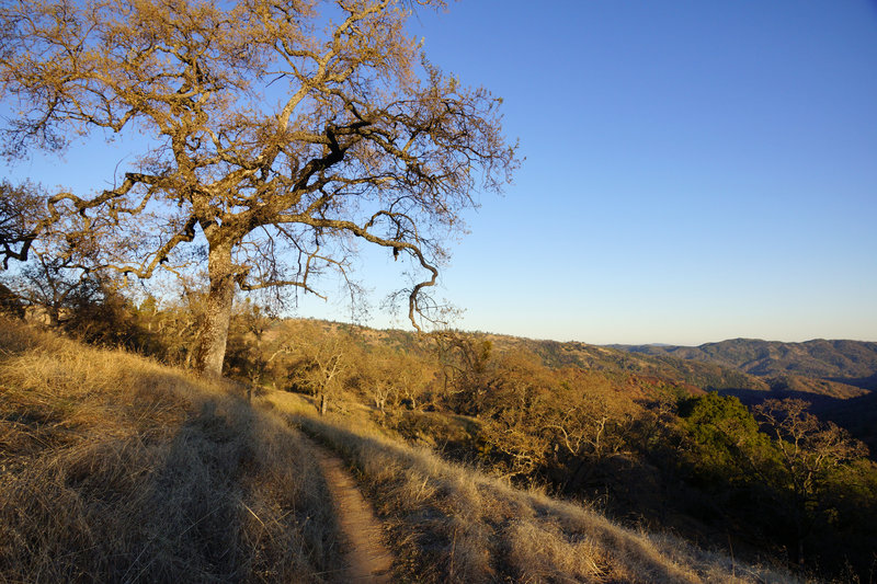 Singletrack in Henry Coe State Park.