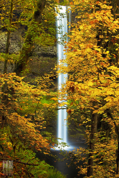 South Falls shrouded by fall leaves.