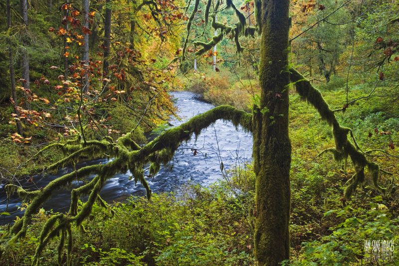 Lush forests surrounding South Fork Silver Creek.