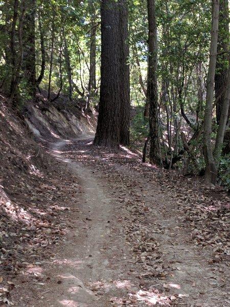 John Nicholas Trail.