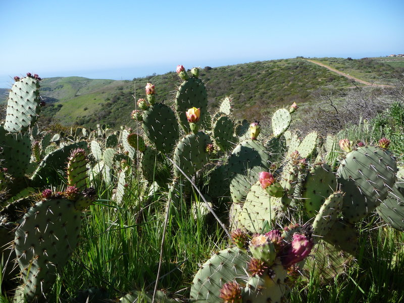 Cactus on No Name Ridge.