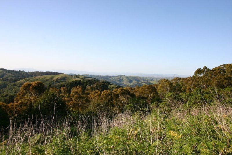 Tilden Park in spring, looking northeast from Seaview Trail.