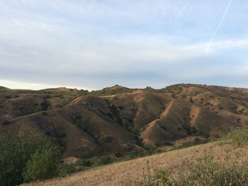 The hills near the Diemer Trail.