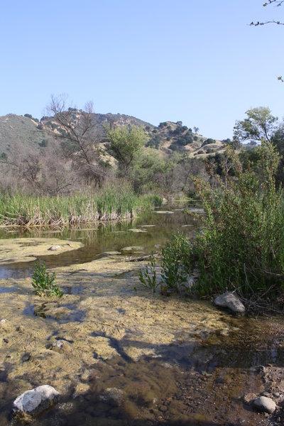 Las Virgenes Creek.