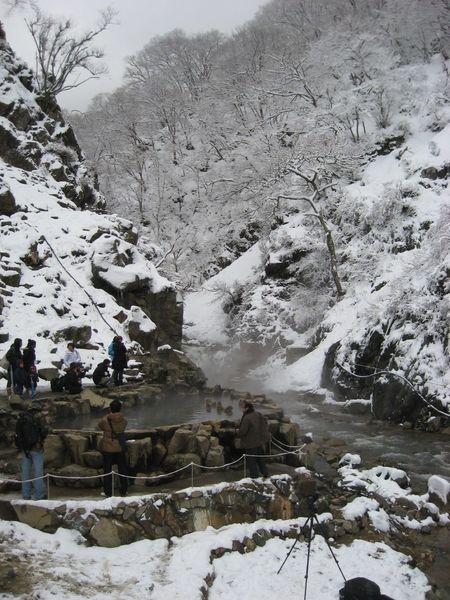 Snow monkeys taking onsen.
