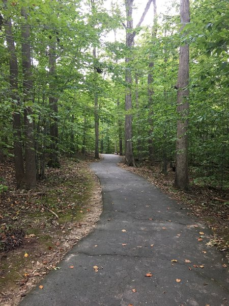 Paved pathway typical of South Run Stream Valley Trail.