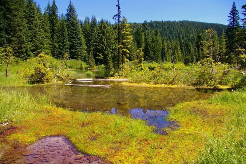 Kinzel Lake next to the trail, is small and swampy. Mosquito repellent is mandatory in early summer. Photo by John Sparks.