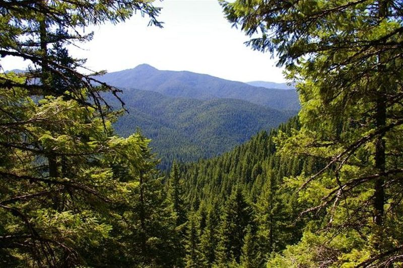 The intersection of Kinzel Lake Trail and Salmon River Traill#742 offer wilderness views. Photo by John Sparks.