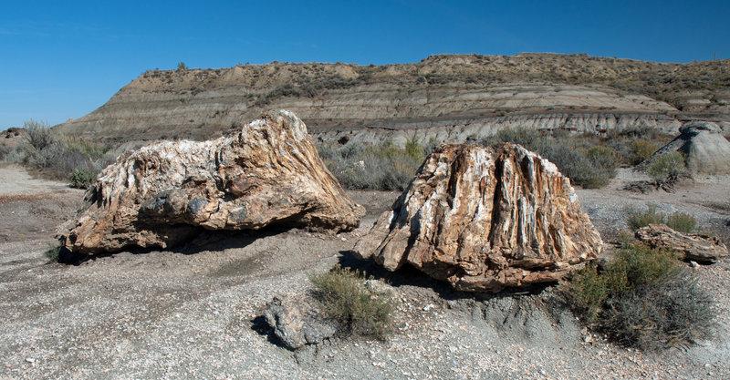 Petrified wood stumps along the North Petrified Trail.