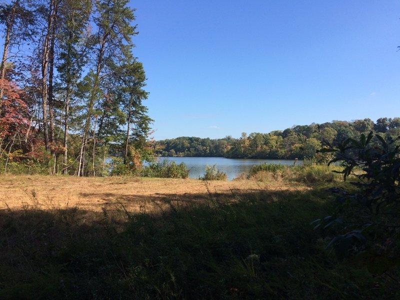 Lake Higgins from a utility cut.