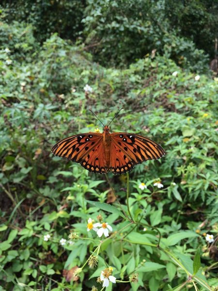 The trail is full of gorgeous butterflies!