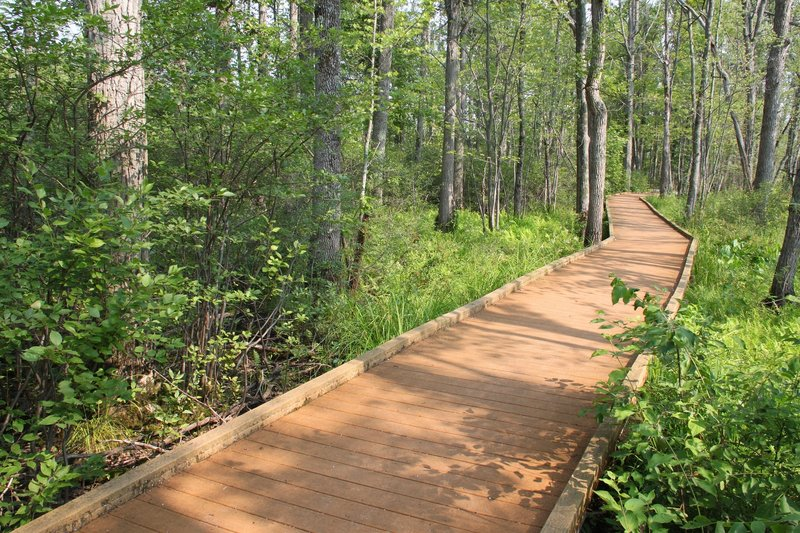 The boardwalk in summer on the Discovery Trail.