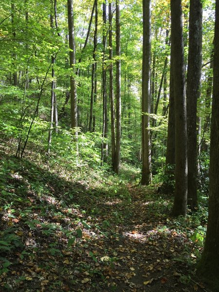 The Jonas Creek Trail--even away from its numerous creekside spots--contains many peaceful, shady areas.
