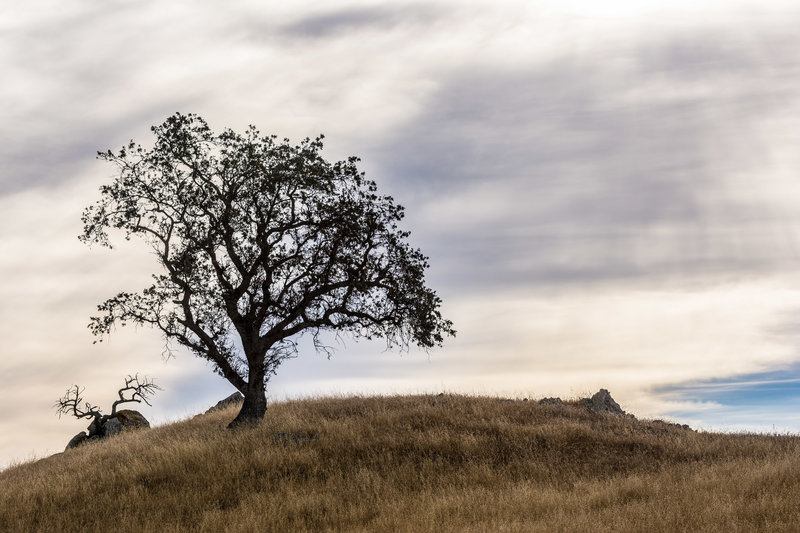 Tree and clouds on the Aquila Loop Trail.