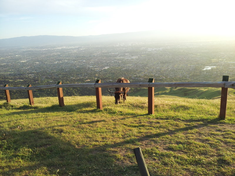 Santa Clara Valley from Boccardo Loop Trail.