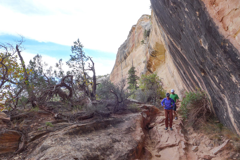 An amazing canyon trail takes you by three natural bridges and endless views of beautiful Southern Utah.
