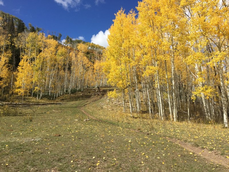"One of the ""Aspen Flats"" on this trail."
