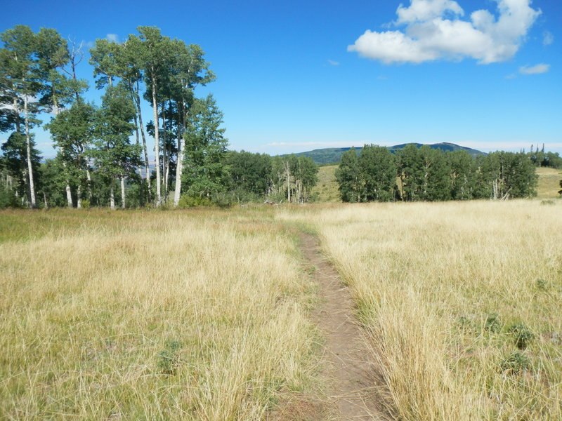 This is probably Robertson Pasture, the feature for which the trail is named.