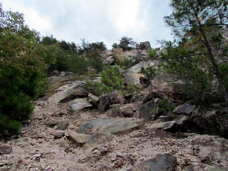 Along the Chestnut Oak Trail.