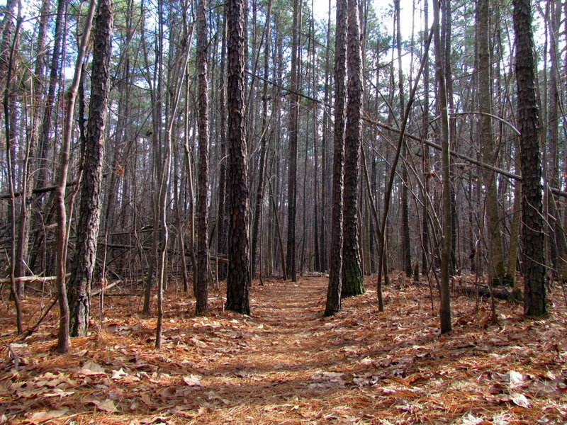 Trees line the trail.
