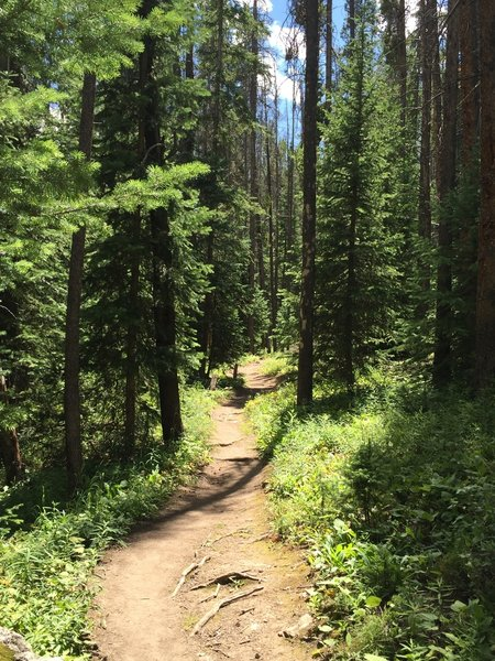 Forested trail, good for a hot day.