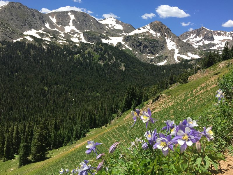 Columbine on the trail up. This is what heaven looks like. It has to.