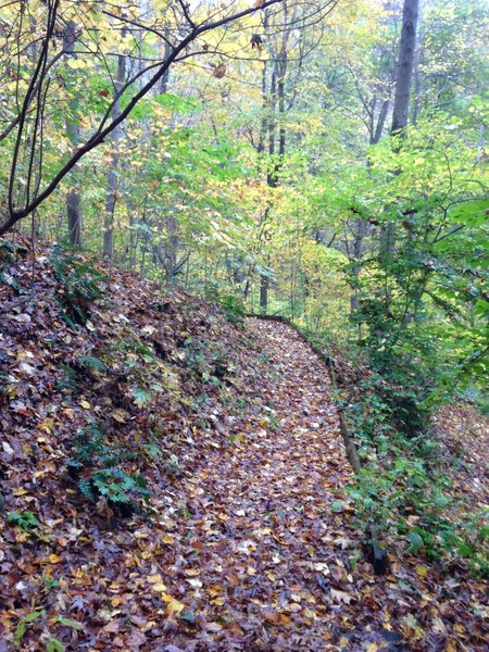 A fall perspective along the Upper Trail.