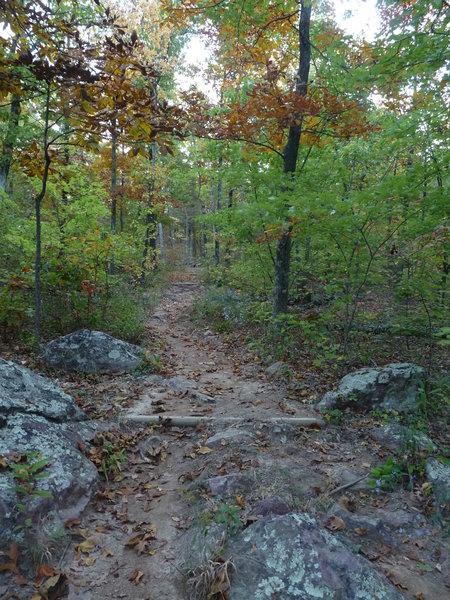 Beautiful trail on the Taum Sauk!