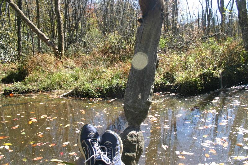Enjoying a sunny day near the water's edge.