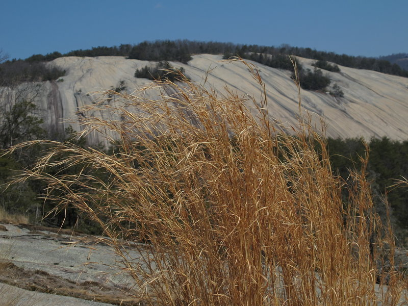 The summit of Wolf Rock provides great views of Stone Mountain through the fall grass.