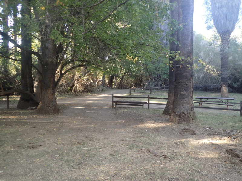 Picnic area at the Palm Lake trail.
